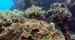 Australia: la Gran Barrera de Coral podría perder su capacidad de recuperarse del calentamiento