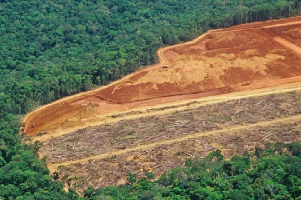 Un estudio advierte que al menos un 40% de la Amazonía podría transformarse en un ecosistema tipo sabana