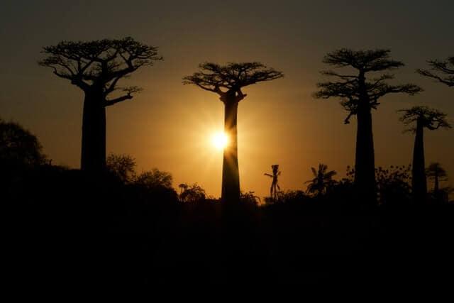 imagen Madagascar dmitrii zhodzishskii JyN RZBCwRo unsplash 1