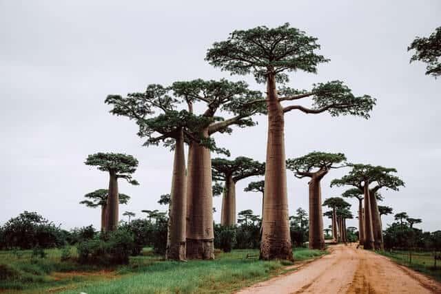 imagen Madagascar theme inn yPSbirjJWzs unsplash 2 1