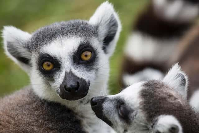 imagen Madagascar diana parkhouse rB8qv3rOIqA unsplash 1