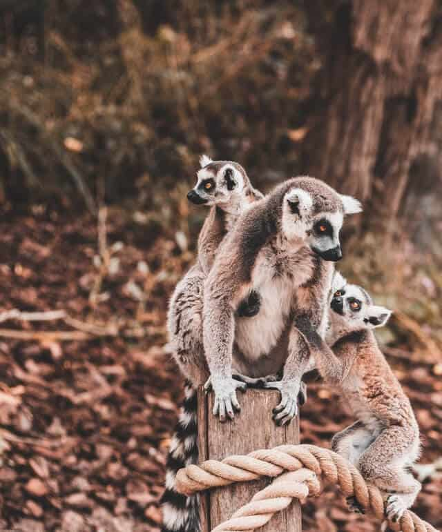 imagen Madagascar roman laschov SdkAHfhhxRk unsplash 1 1