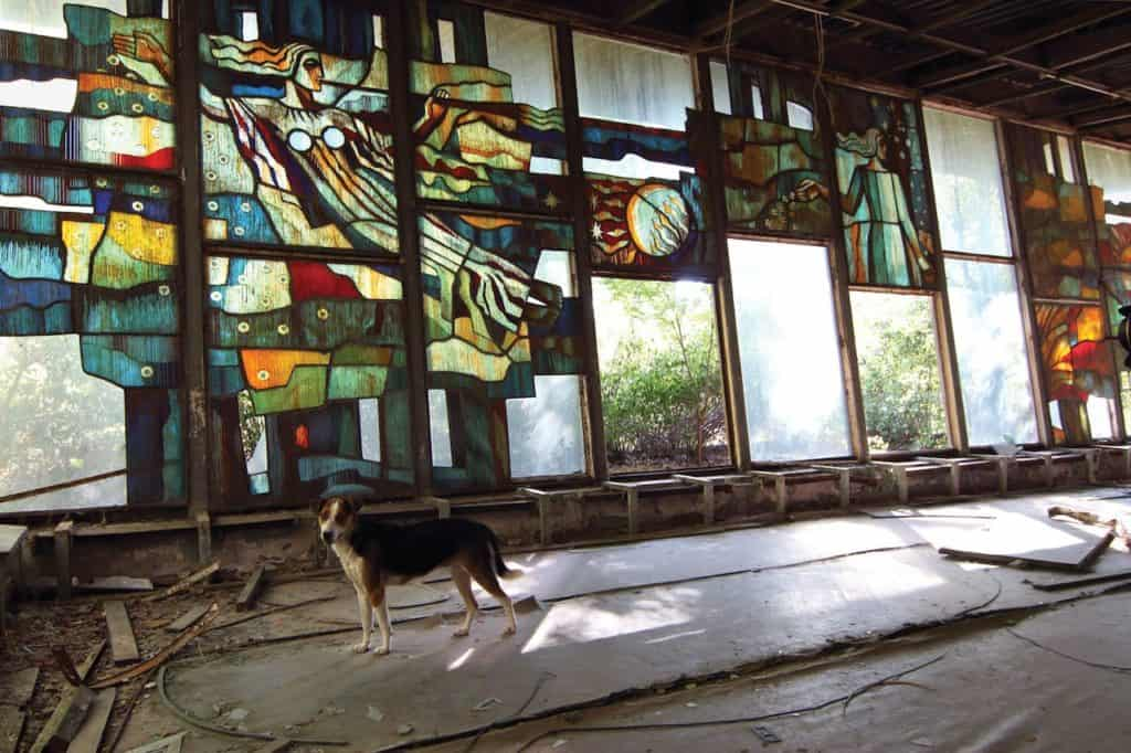 imagen Chernobyl Stained glass and dog in abandoned building in Chernobyl