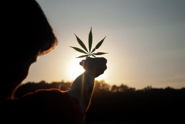 cannabis / marihuana