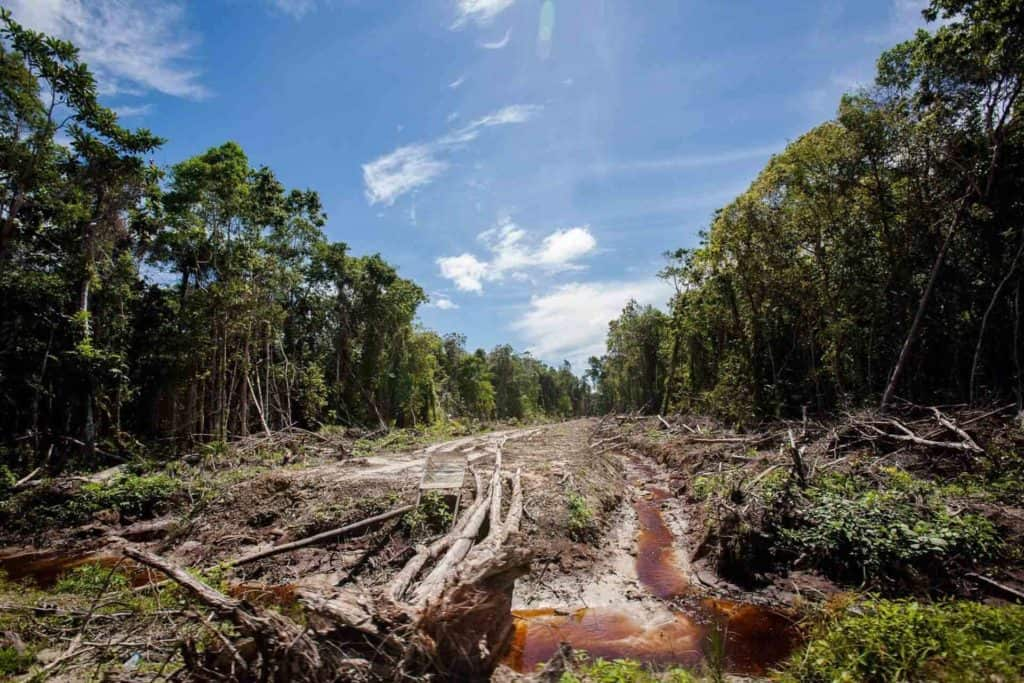 deforestacion amazonas colombia