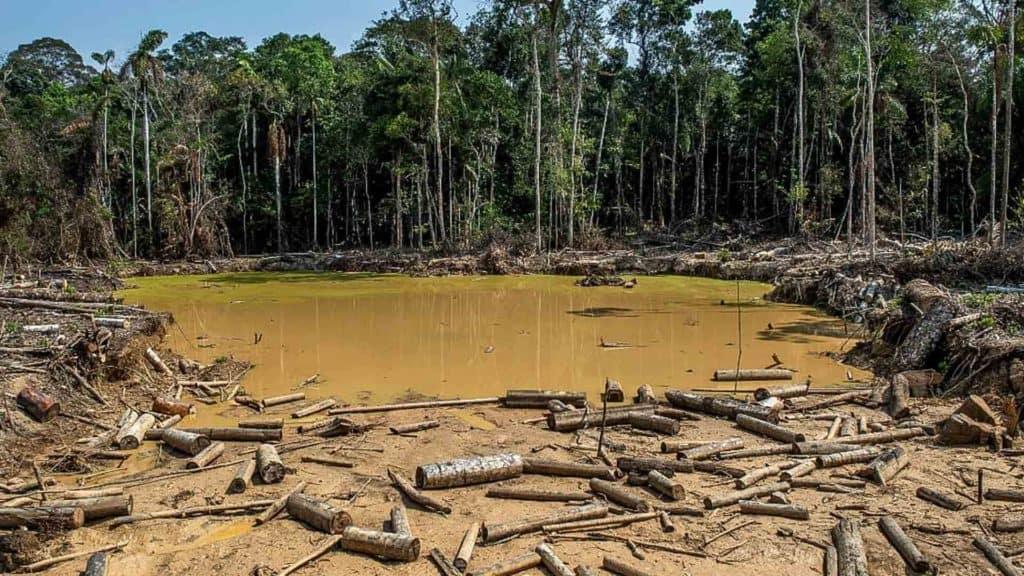 deforestacion amazonas colombia portadas
