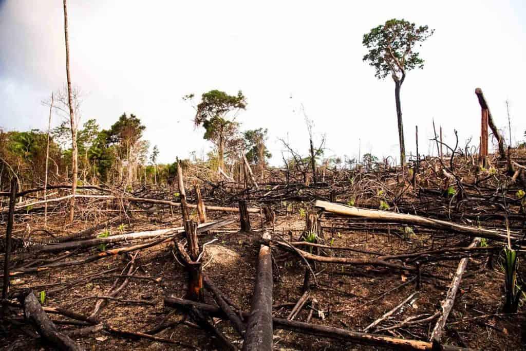 Cada 5 minutos 100 hectáreas de selva desaparecen. Esto sucede hoy y todos deben saberlo