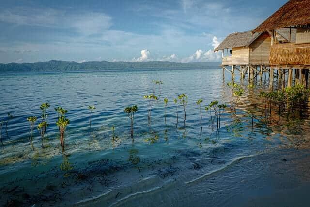 imagen Raja Ampat saul mercado r 2t0AuZMNQ unsplash 1
