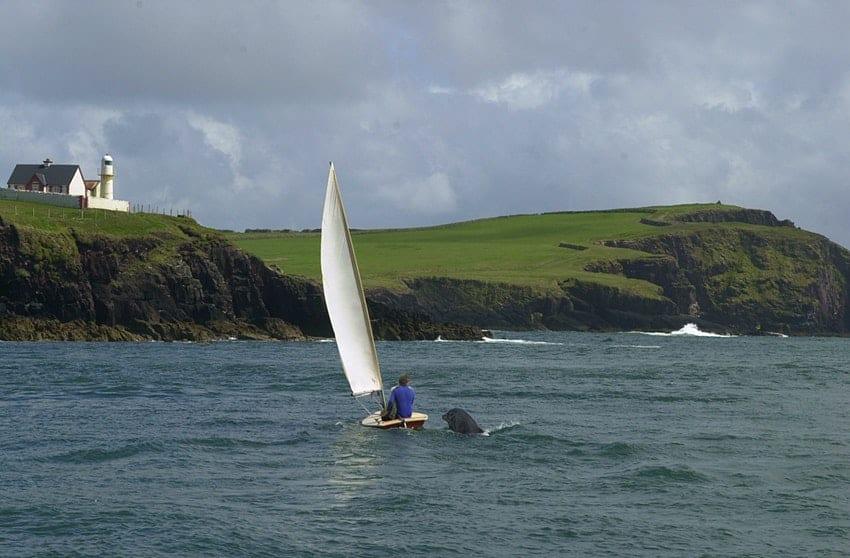 Irlanda: un delfín que solía estar en la costa y acompañar a las personas no aparece hace varios días y genera preocupación