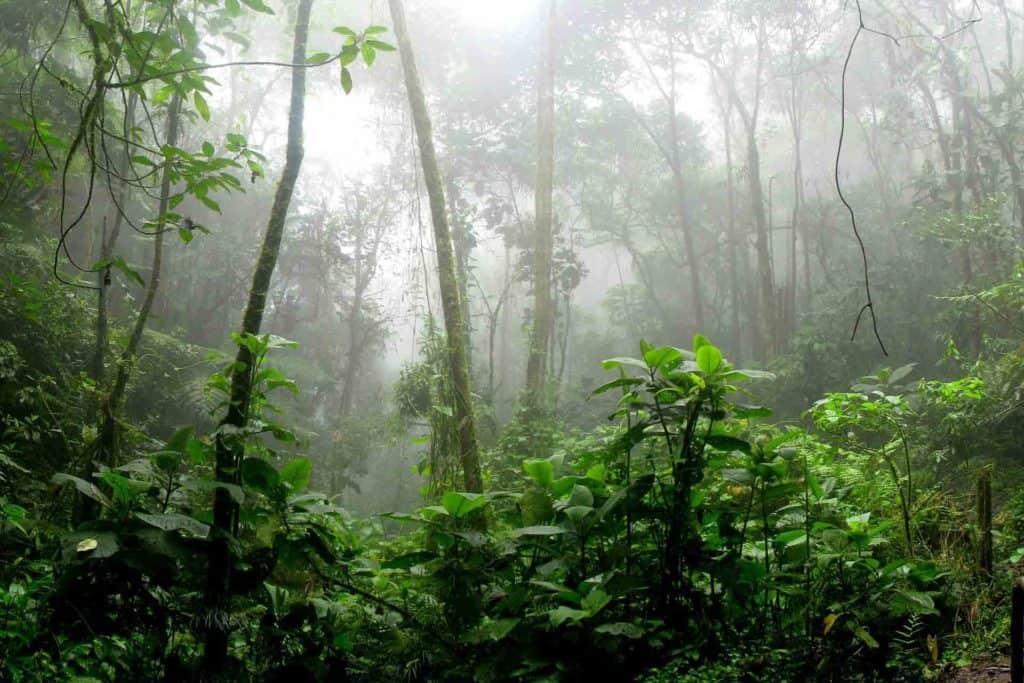 Conoce cómo ser un comprador consciente y ayudar a reforestar el Amazonas