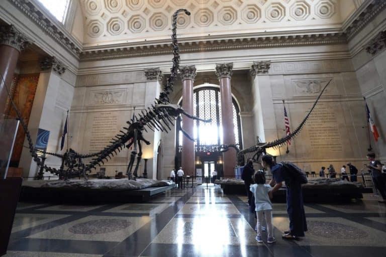 El Museo Americano de Historia Natural se prepara para Halloween con eventos online