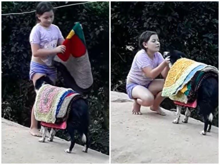 perro canasta