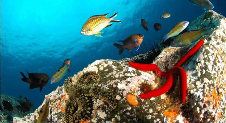 imagen Qué hacer en Madeira madeira deporte diving