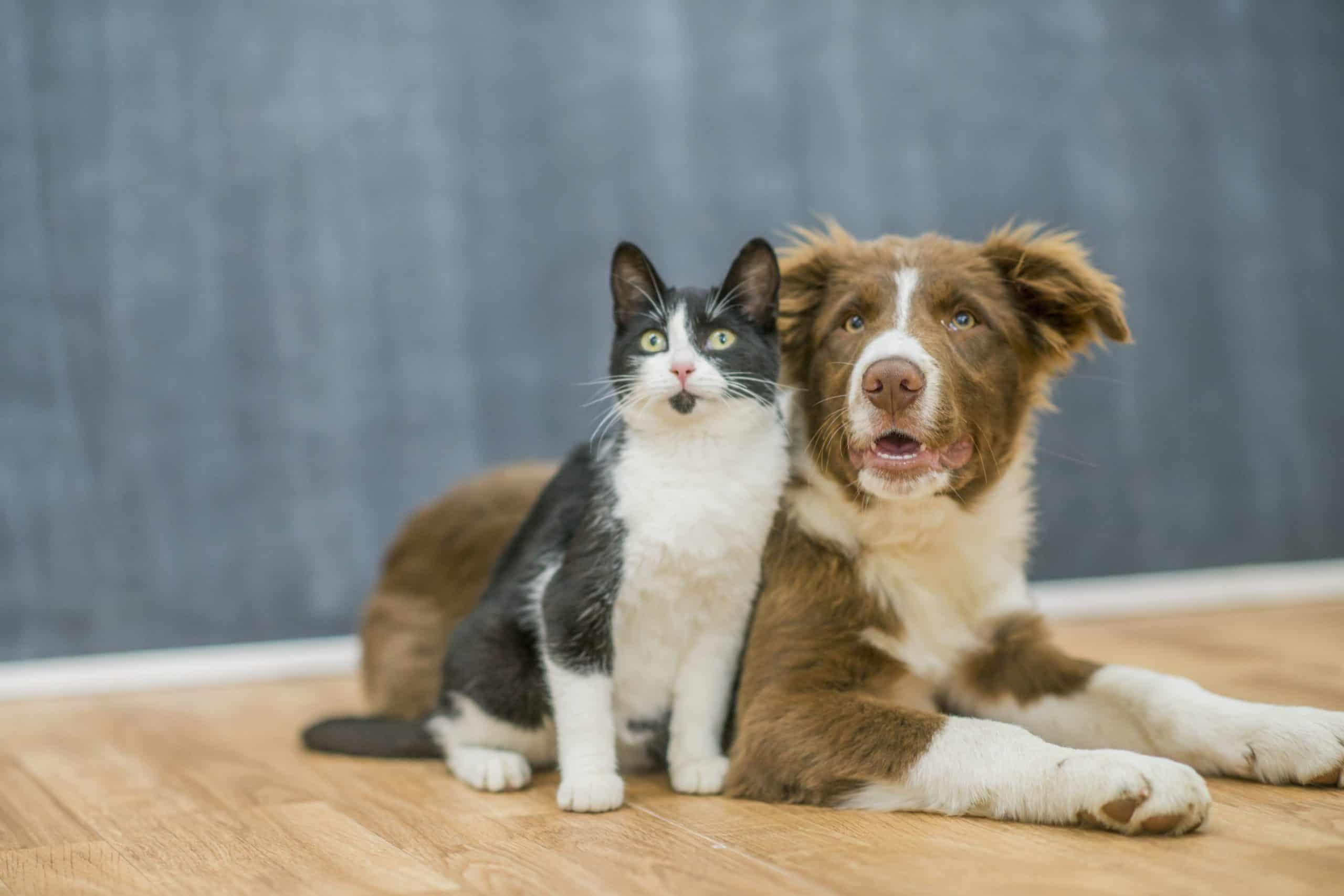 Australia: las personas que abusen de sus mascotas deberán pagar una multa de hasta $110000 y podrán enfrentar hasta 2 años de prisión
