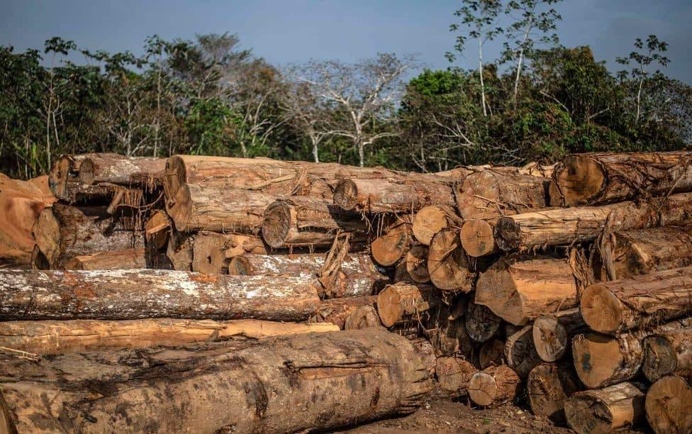5 pequeñas acciones que puedes hacer desde tu casa para salvar el Amazonas