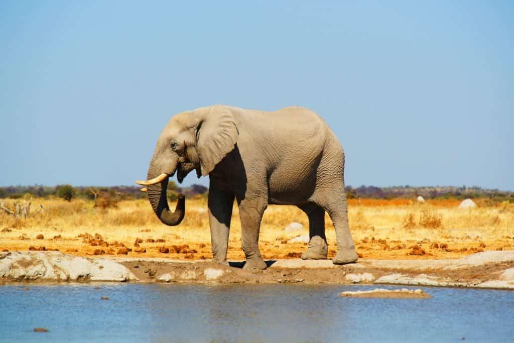 Botsuana se está preparando para volver a recibir turistas internacionales