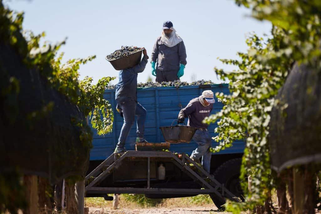 Mendoza busca 10.000 personas para trabajar en las viñas ante la llegada de la vendimia del 2021