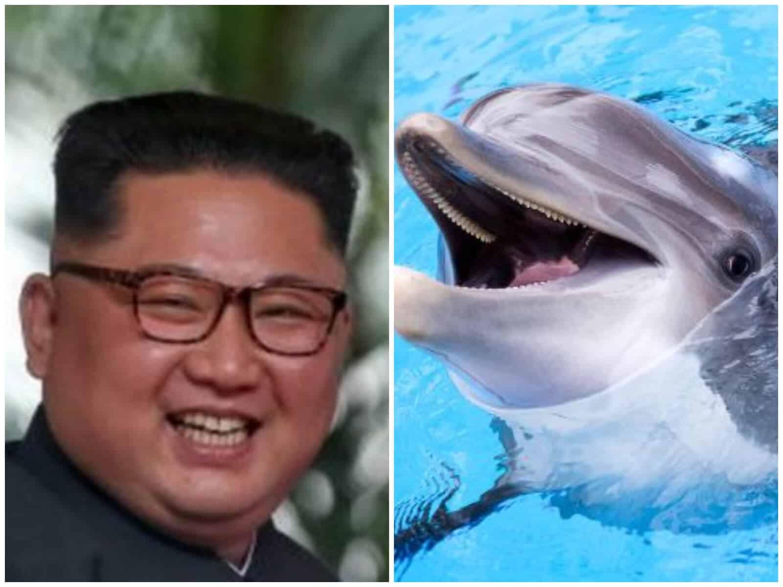 delfines corea norte