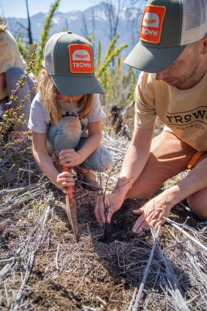 reforestar árboles afectados