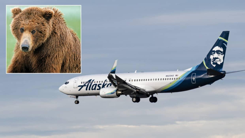 oso aeropuerto