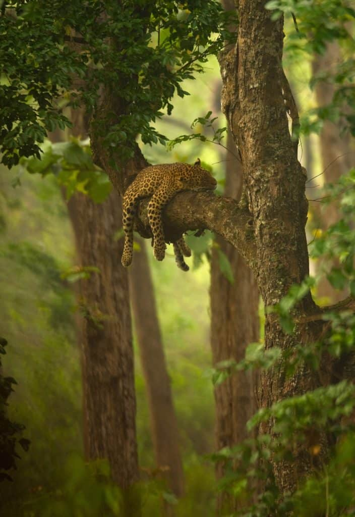 fotógrafos de vida silvestre