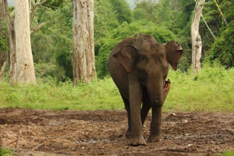 India: luego de más de 12 horas de trabajo lograron rescatar a un elefante que había caído en un pozo