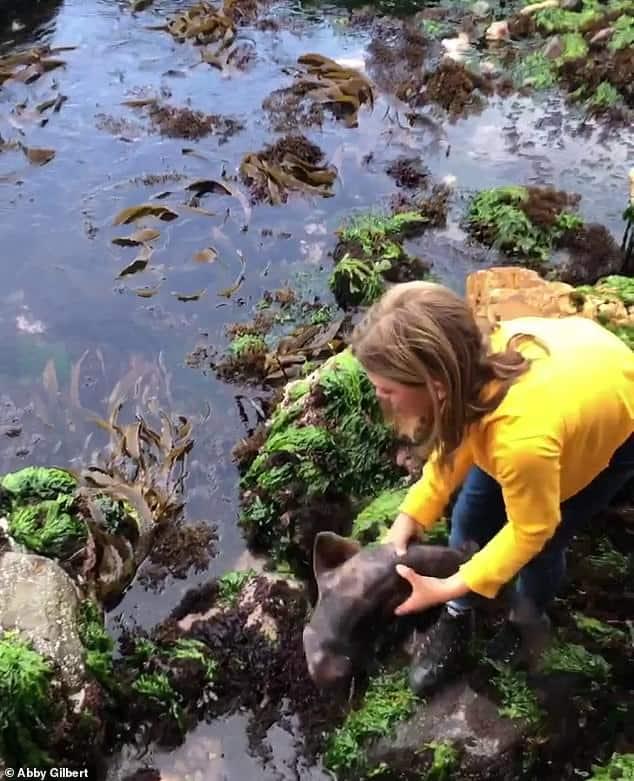 Australia: una niña de 11 años rescató a un tiburón en Tasmania