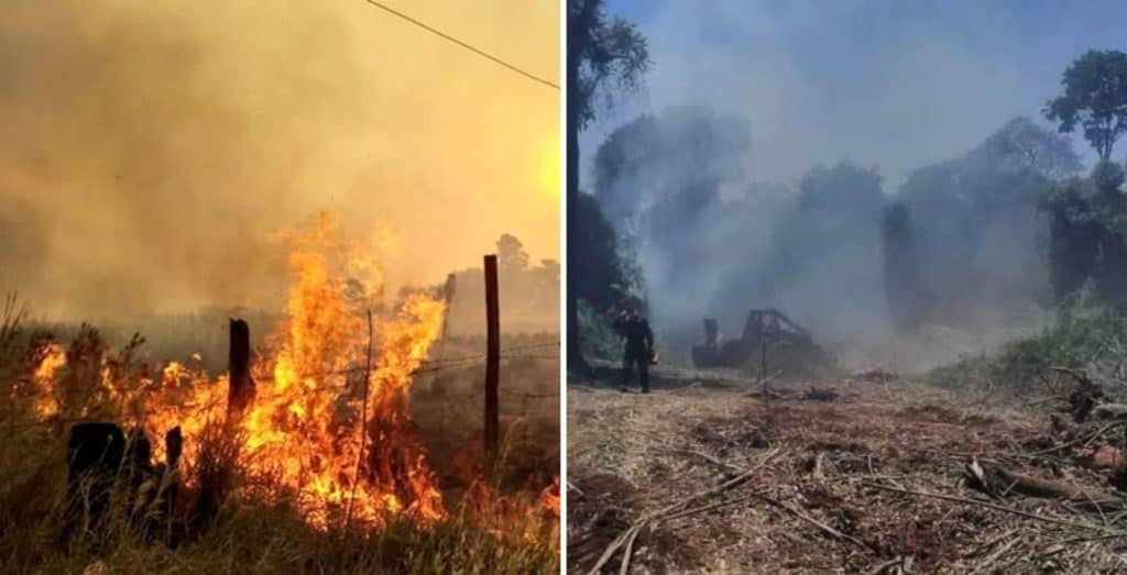 Lograron controlar los incendios de la provincia de Misiones, donde se quemaron alrededor de 100 hectáreas en la Reserva de Biósfera Yabotí