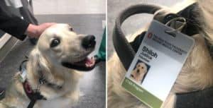 Un hospital de Ohio contrató a un perro para ayudar a levantarle el ánimo a las personas que trabajan allí