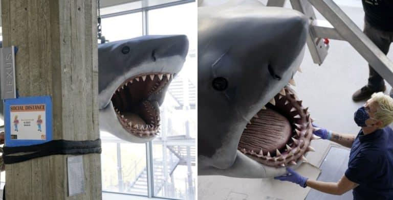 Bruce, el tiburón inspirado en la película 'Jaws', estará en exhibición en el Museo de la Academia de Cine