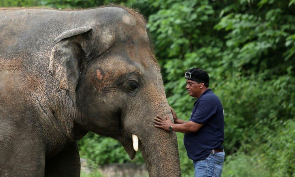 Kaavan, El 'Elefante Más Solitario Del Mundo' Ya Está Listo Para Vivir En El Santuario De Camboya