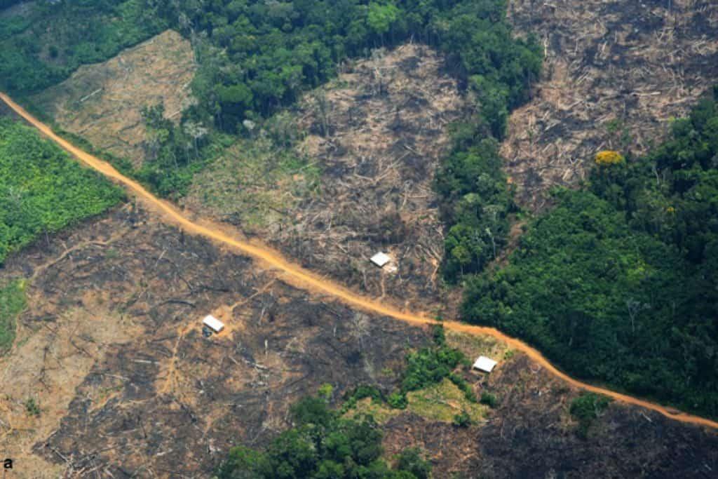Brasil Lanza El Corredor De Biodiversidad De Araguaia, El Mayor Corredor De Reforestación De Sudamérica