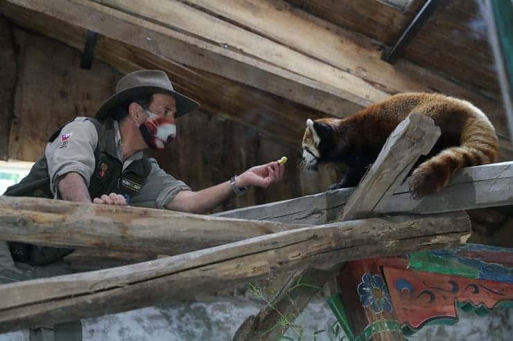 imagen zoológico chileno pandas rojos