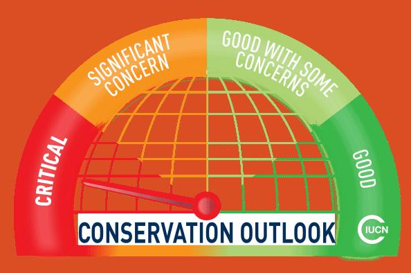 Australia: un estudio reveló que la Gran Barrera de Coral se encuentra en estado crítico