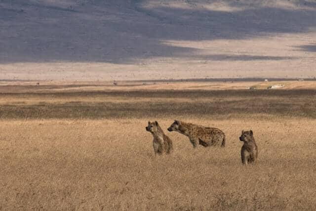 Mejores Safaris De África