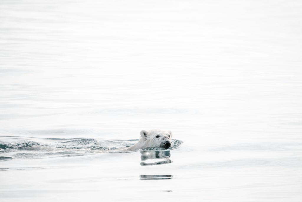 Un nuevo reporte muestra que el Ártico está cada vez más verde, más cálido y con menos hielo