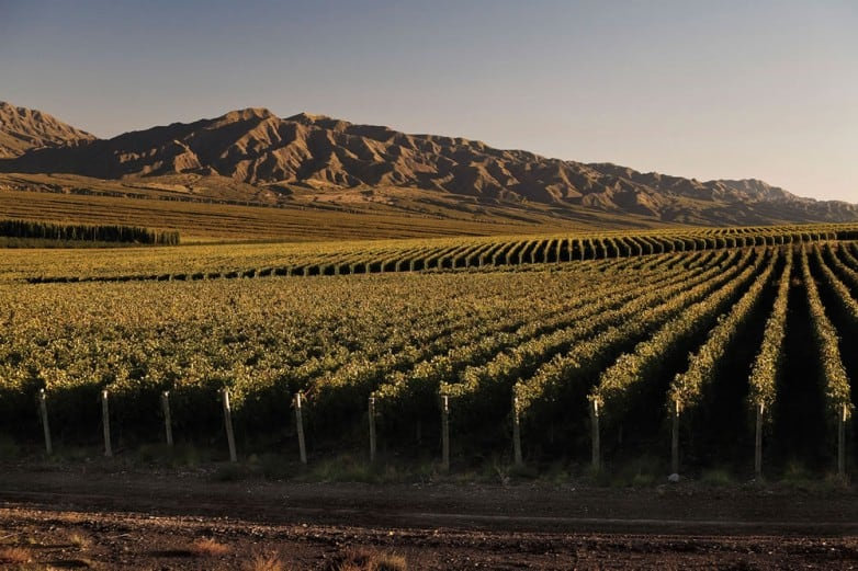 ruta del vino argentina y chile 1