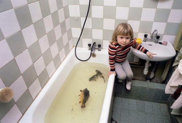 Esta es la razón por la que familias en Polonia mantienen una carpa viva en la bañera antes de Navidad