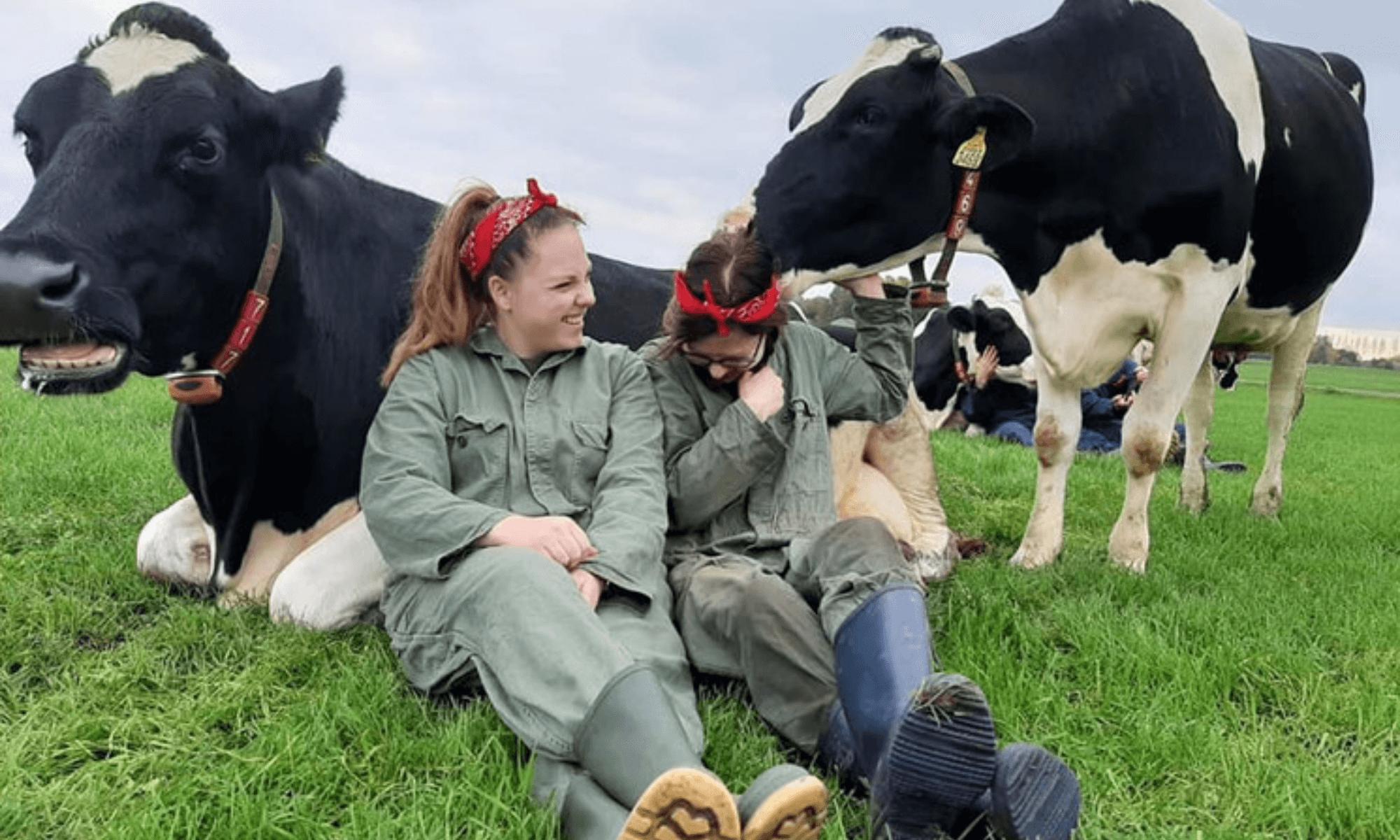 tendencia holandesa de acariciar vacas que ayuda a liberar oxitocina (1)