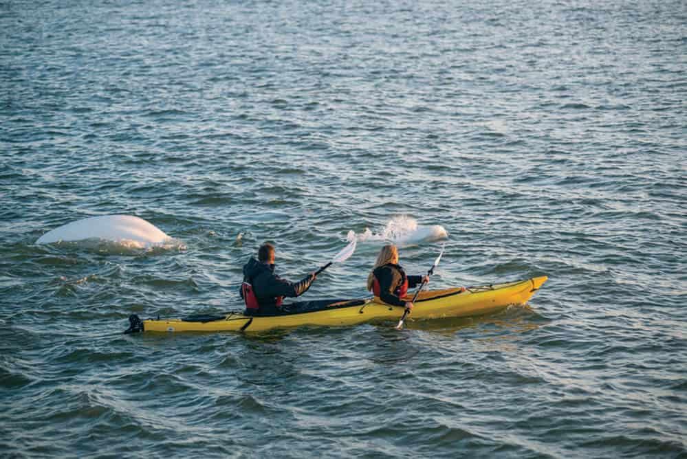 imagen mejores sitios del mundo para hacer kayak 48081147551 3f061d3f29 c 1 1