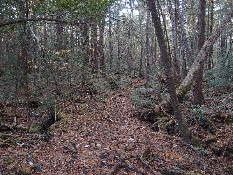 bosques más tenebrosos del mundo