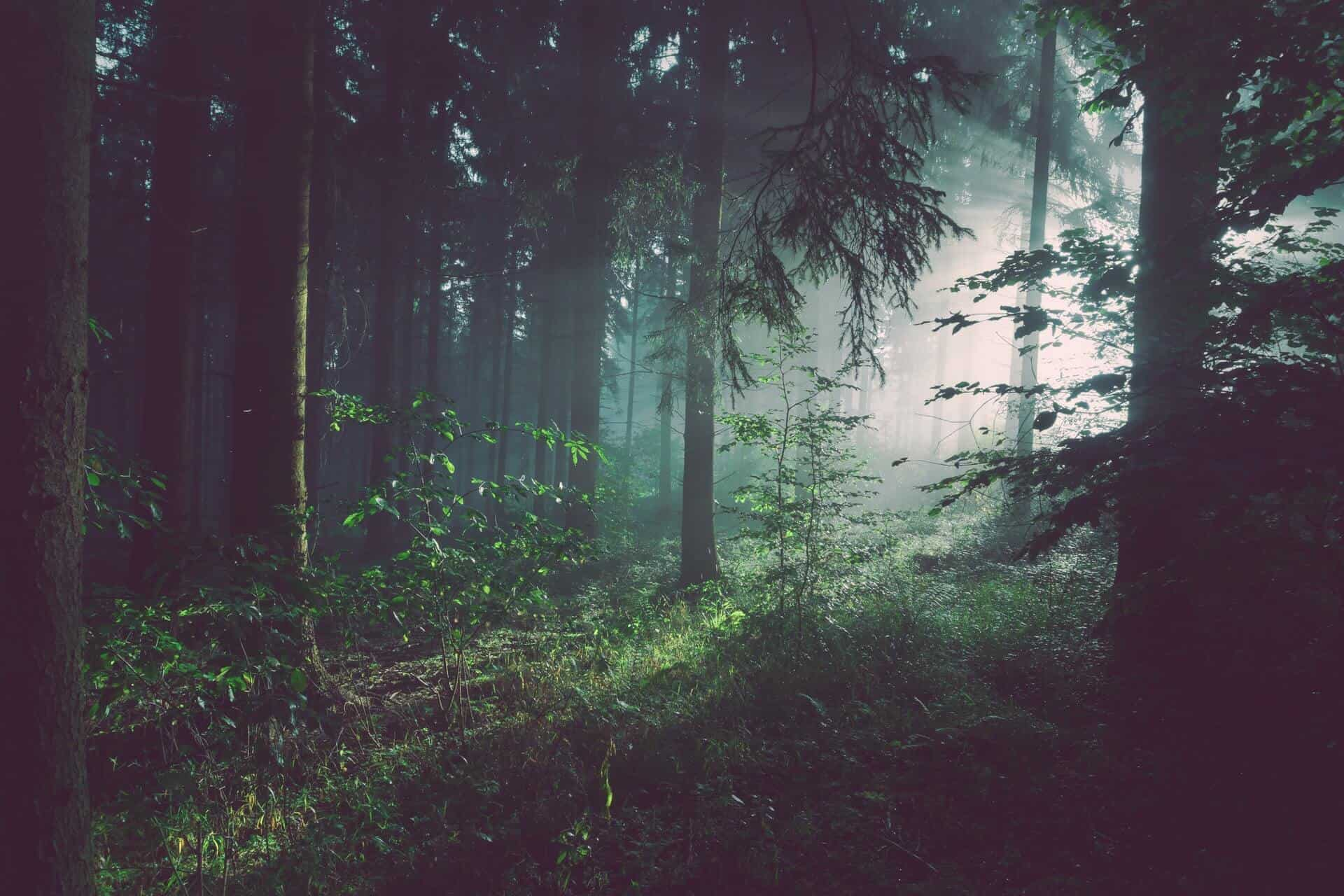 Bosques tenebrosos