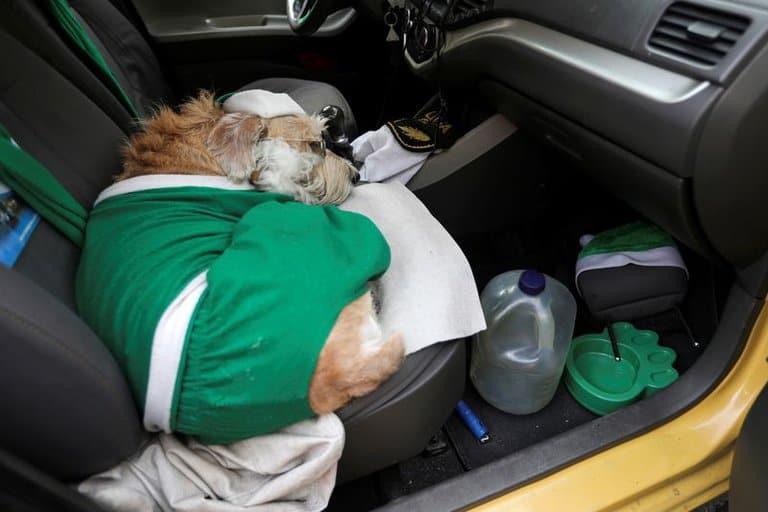 Coronel, el perro de Bogotá que acompaña a los pasajeros de un taxi como copiloto disfrazado de Papá Noel