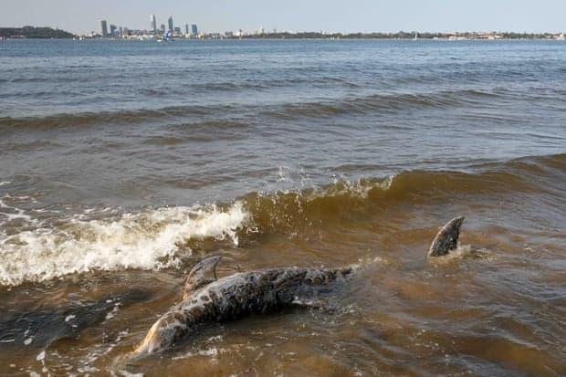 Una enfermedad fatal está afectando la piel de los delfines y está relacionada con el cambio climático