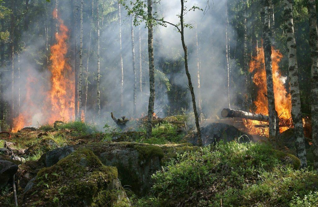 Declaran que la selva amazónica desaparecerá para 2064