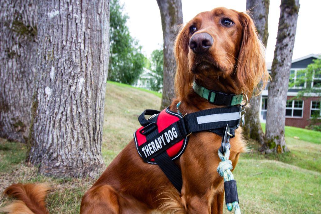 La aerolínea Alaska Airlines tomó la decisión de quitarles los privilegios a los animales de apoyo emocional en todos sus vuelos