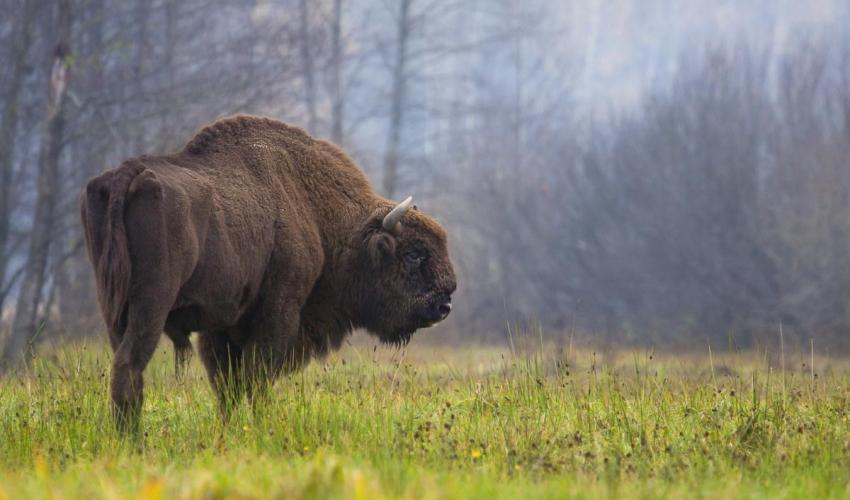 """La nueva """"lista roja"""" de la UICN revela que 25 especies se están recuperando y otras 31 especies han sido declaradas extintas"""