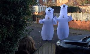 disfraces inflables de oso polar