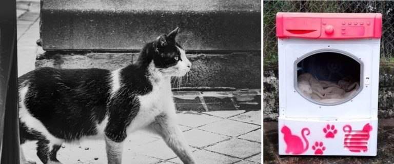 Los gatos callejeros de Portugal tendrán nuevas casas coloridas y especialmente decoradas