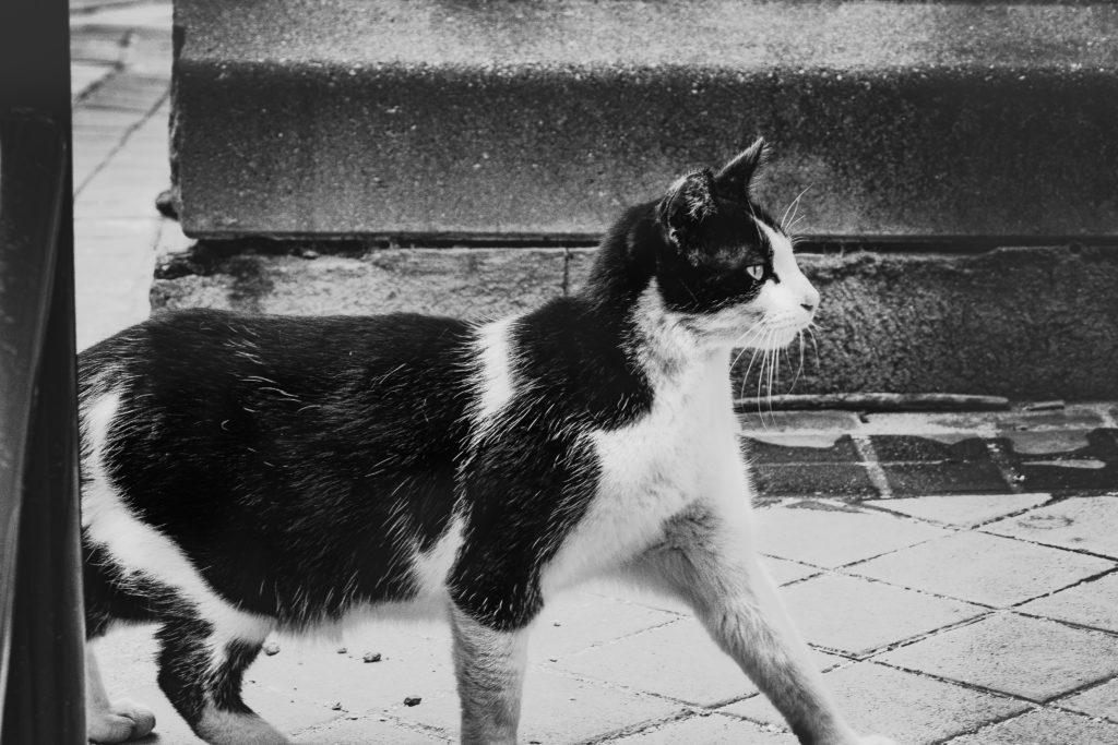 Los gatos callejeros de Portugal tendrán nuevas casas